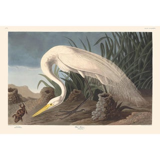 Audubon Havell Edition Pl. 386 White Heron Print For Sale