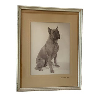 Vintage Framed Photograph of a Sitting Boxer, Circa 1940s For Sale