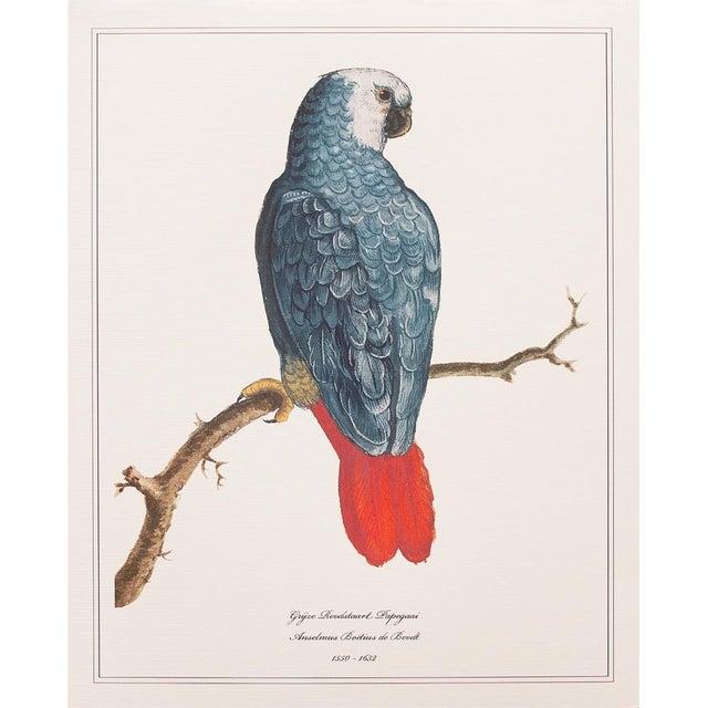 2010s 1590s Anselmus Boëtius De Boodt, Parrot Print Set of 9 For Sale - Image 5 of 13