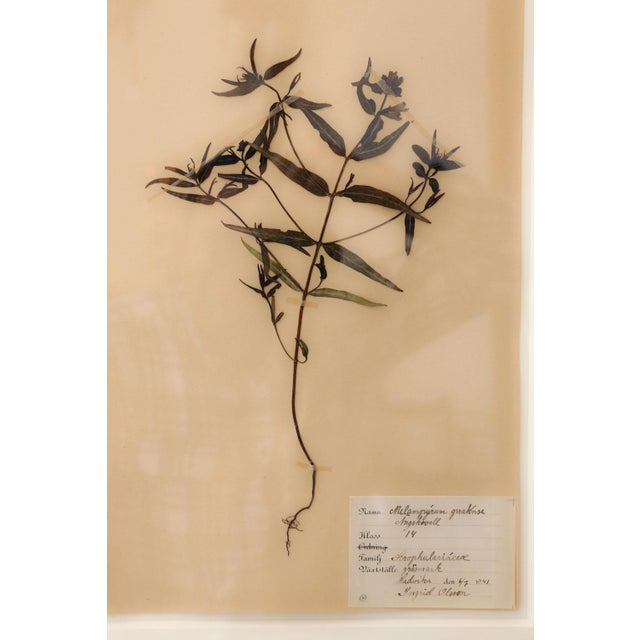 Framed Set of Four Herbaria For Sale - Image 9 of 12