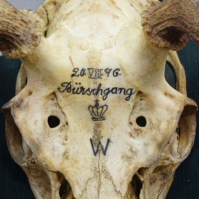 Antique Black Forest Deer Trophy From Salem - Germany 1876 For Sale - Image 4 of 6