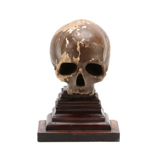 17th Century Italian Memento Mori Skull For Sale
