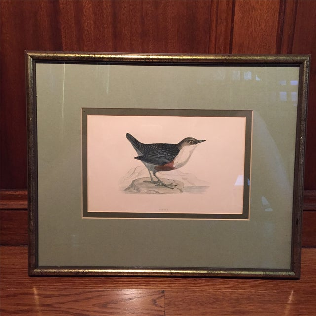 18th C. English Bird Prints in Matching Frames - Image 3 of 12