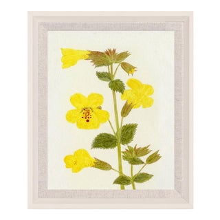 Hubbard Flower, Small: 2912 Artwork, Framed Artwork For Sale