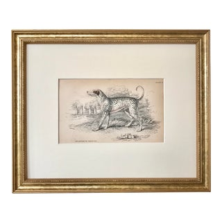 Antique Dog Print Dalmatian by Sir William Jardine London 1854 For Sale