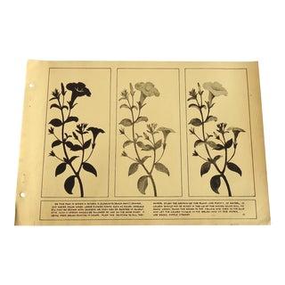 1930 Art Deco Petuna Silhouette Design Print Character Culture Citizenship Guides For Sale