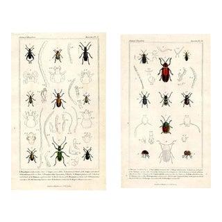 1834 Beetle Prints, Pair For Sale