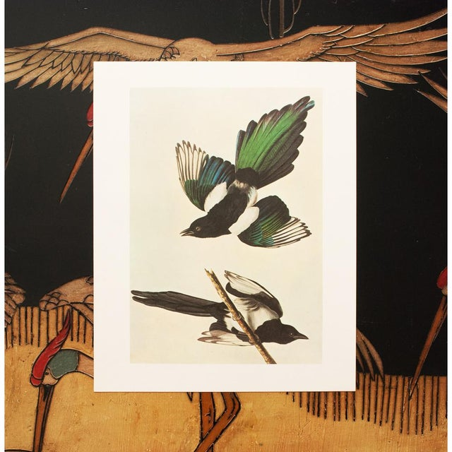 "1966 ""American Magpie"" Lithograph by John James Audubon For Sale In Dallas - Image 6 of 8"