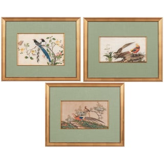 19th Century Chinese Watercolor and Gouache Paintings of Birds - Set of 3 For Sale