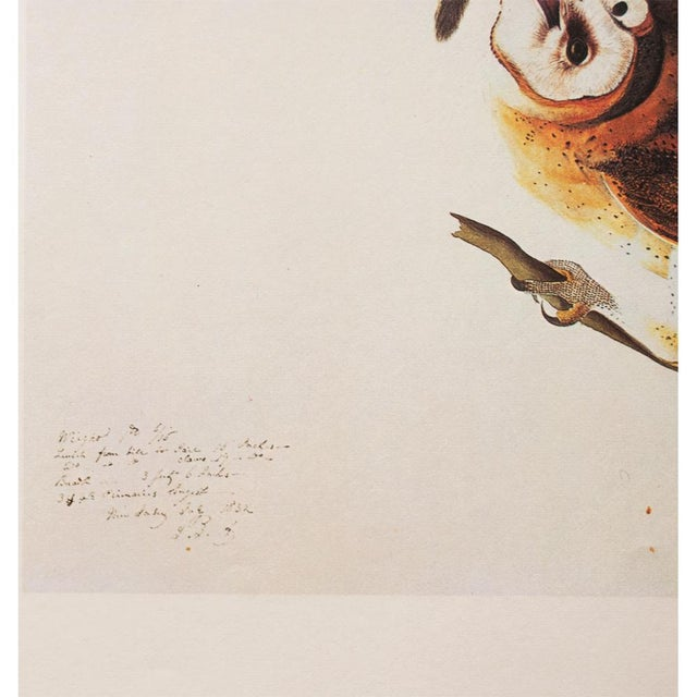 1960s 1966 John James Audubon Barn Owls Lithograph For Sale - Image 5 of 9
