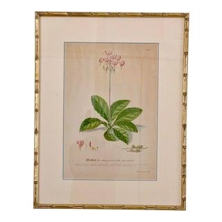 Antique Botanical Engravings in Custom Bamboo Framing For Sale