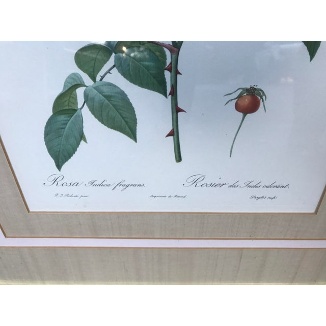 Late 18th Century Pierre Joseph Redoute Botanical Rose Large Lithographs - a Pair For Sale - Image 5 of 8