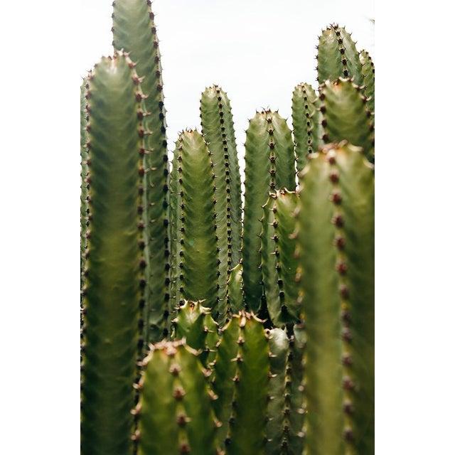 """San Pedro Cacti"" Original Framed Photograph For Sale - Image 4 of 4"