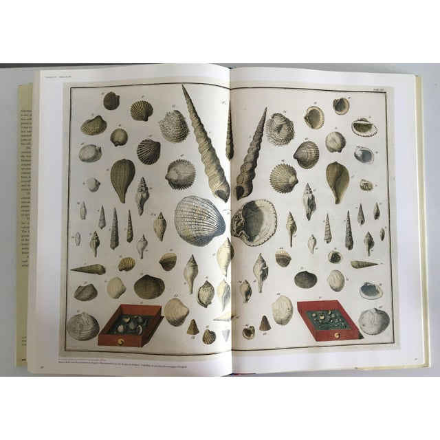 Moving Sale - Cabinet of Curiosities Book by Albertus Seba - Image 5 of 11