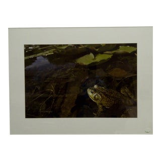 """2010 Original """"Bullfrog"""" Color Photograph From the Life in Homewood Cemetery Exhibition"""