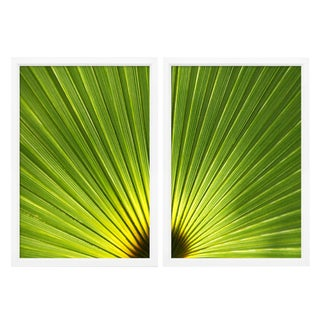 Ben Wood Leaf Diptych Photographs - A Pair For Sale