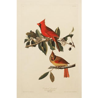 1990s Cardinal Grosbeak by Audubon, Large American Classical Print For Sale