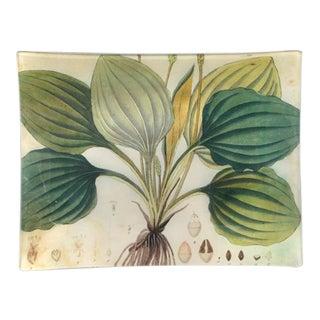 John Derian Decoupage Plate With Hosta Plant For Sale