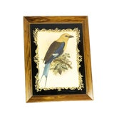 Image of 19th Century Antique John Gerald Keulemans Framed and Signed Hand-Colored Bluebellied Roller Bird Lithograph Print For Sale