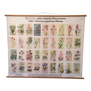 German Botanical Endangered Species Chart For Sale
