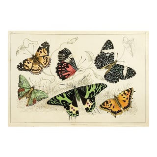 1860's English Traditional Print on Paper of Butterflies by Fullerton Co