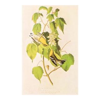 """1966 Audubon """"Hemlock Warbler"""", Vintage Cottage Style Print For Sale"""