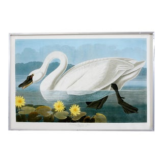 Audubon Common American Swan Plate #411 Havell Oppenheimer Edition For Sale