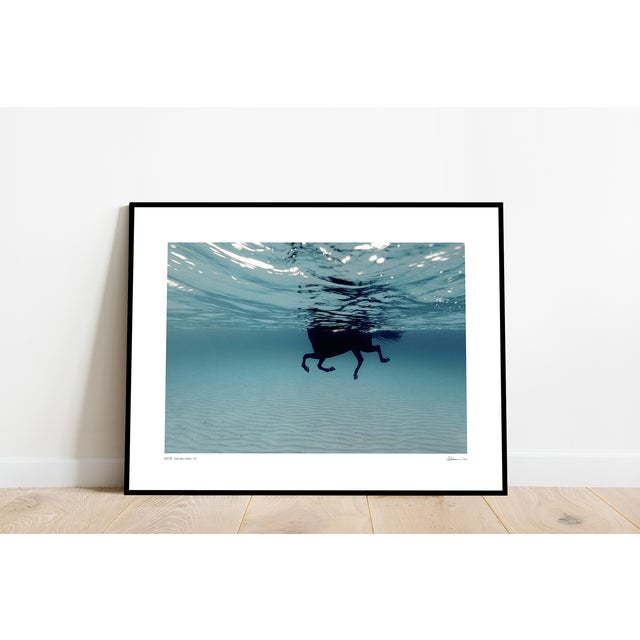 Swimming Horse in the Mediterranean, Framed Print on Archival Paper by artist Enric Gener from the Island of Menorca,...
