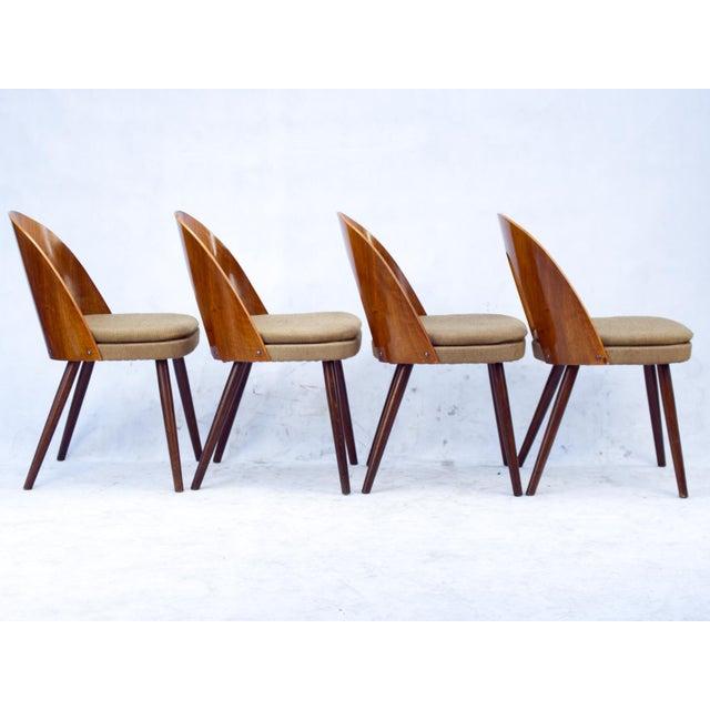 1960s 1960s Antonín Šuman for Tatra Nabytok Np Dining Chairs- Set of 4 For Sale - Image 5 of 6