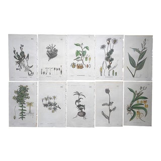 Antique 19th Century Botanical Engravings-Hand Color-Set of 10 For Sale