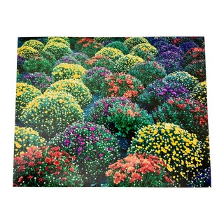 """""""Chrysanthemums, Park Avenue, New York"""" Contemporary Plein Air Photograph Print by Louise Weinberg For Sale"""