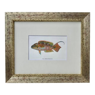 Vintage Hawaiian Fish Lithograph C.1920 For Sale