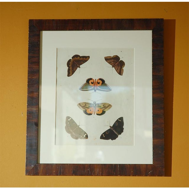 Traditional Early 18th Century Antique Butterfly Prints - Set of 8 For Sale - Image 3 of 11