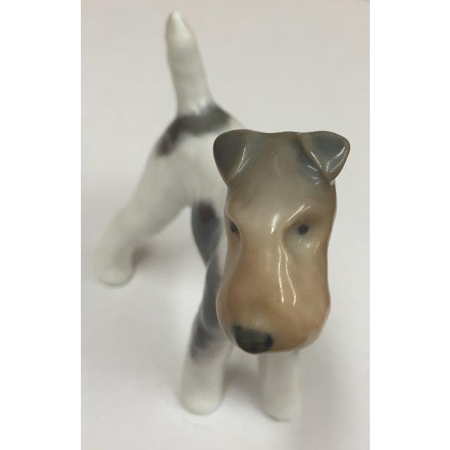 Royal Copenhagen Antique Porcelain Fox Terrier - Image 5 of 6