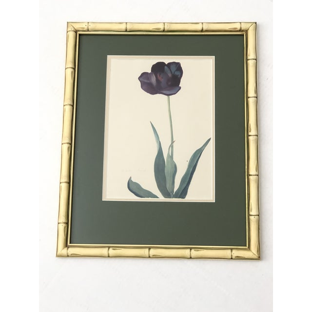 Mid 20th Century Vintage Botanical Prints - Set of 4 For Sale - Image 5 of 6