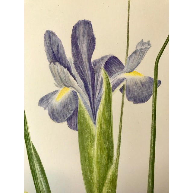 Vintage Watercolor Painting of Iris and Gladiolas by Delonga For Sale In New York - Image 6 of 6