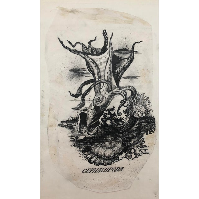 """1940s """"Cephalopoda"""" Octopus Drawing by William Palmer, 1940 For Sale - Image 5 of 5"""