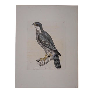 Antique 18th Century Bird Engraving For Sale