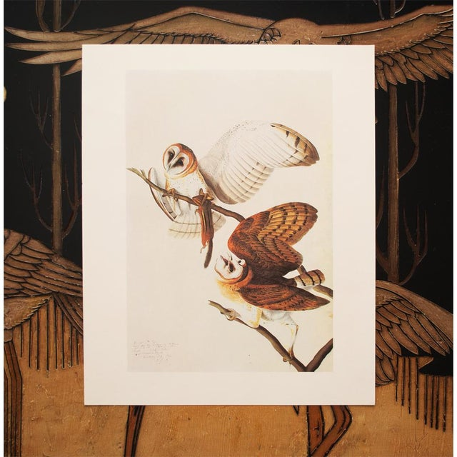 1966 John James Audubon Barn Owls Lithograph For Sale In Dallas - Image 6 of 9