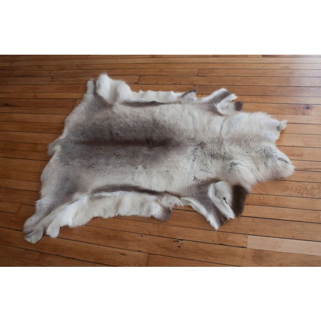 Sorry Rudolph! Gorgeous grey and white reindeer fur throw perfect for any decor style - Hollywood glam, Scandinavian...