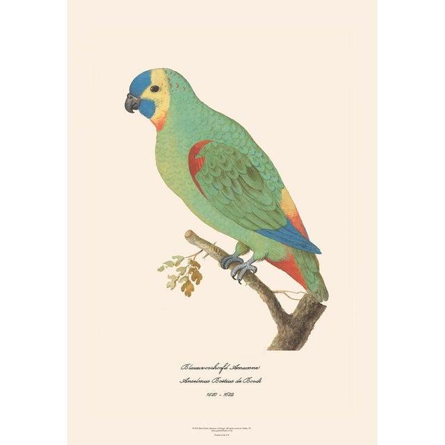2010s XL 1590s Contemporary Prints of Anselmus Boëtius De Boodt Parrots - Set of 4 For Sale - Image 5 of 7