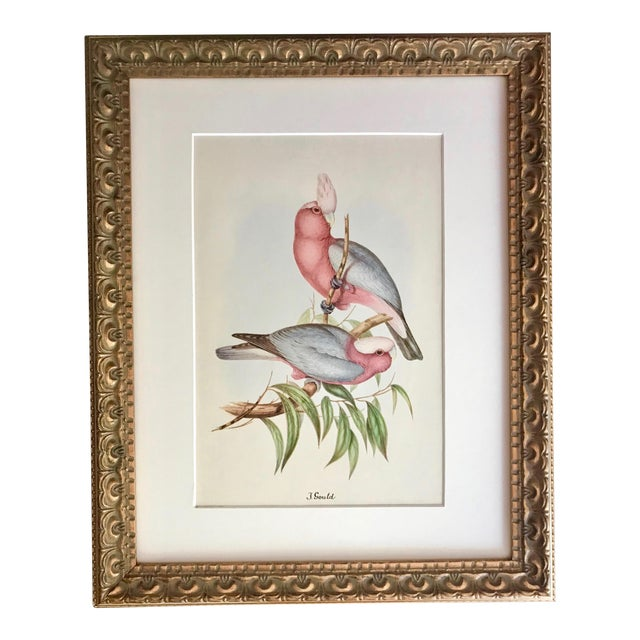 Vintage Lithograph C  1940 S Rose Breasted Cockatoo by John Gould
