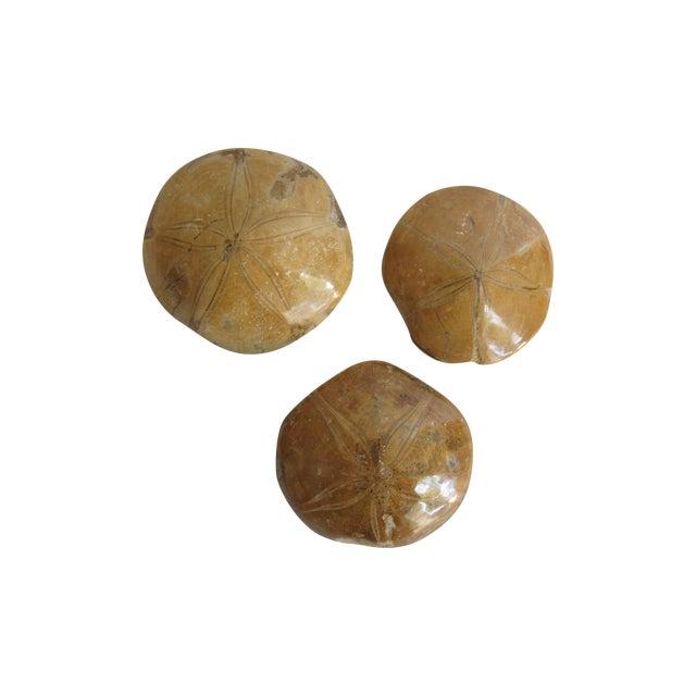 Fossilized Sand Dollars - Set of 3 - Image 1 of 5