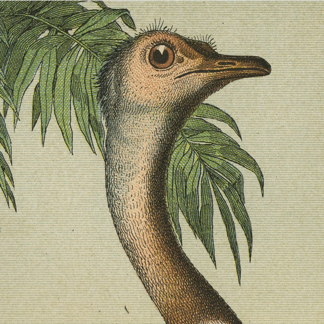 Vintage Ostrich & Friends Archival Print For Sale - Image 5 of 5