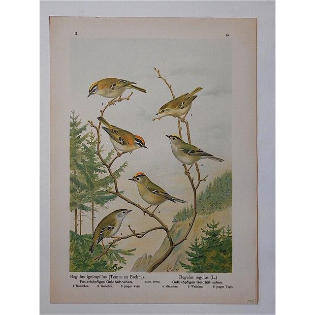 Antique Lithograph - Birds - Image 3 of 3