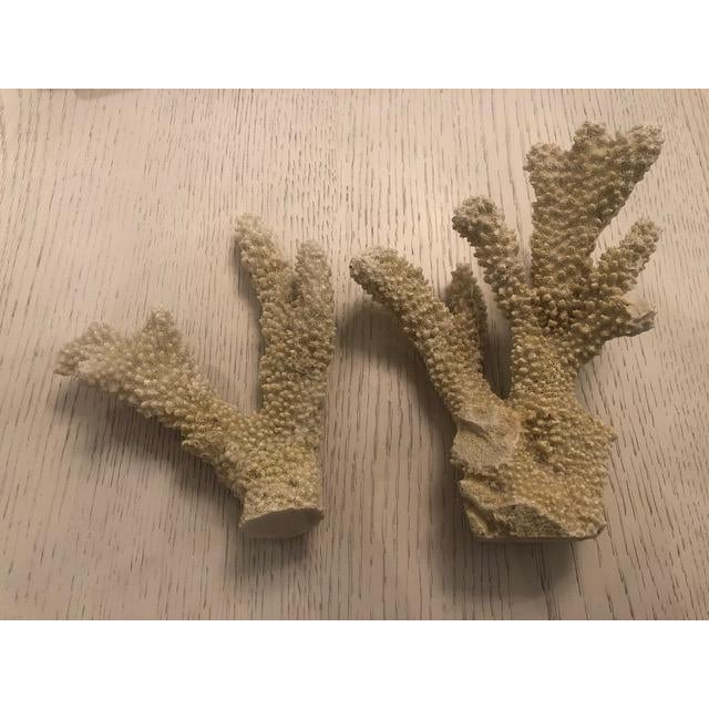 Four faux coral pieces filled with realistic texture. A great accent in any beach home for a decorative display.
