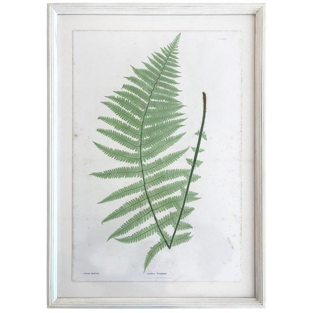 19th Century Bradbury and Evans Nature Printed Fern Print For Sale In Boston - Image 6 of 6