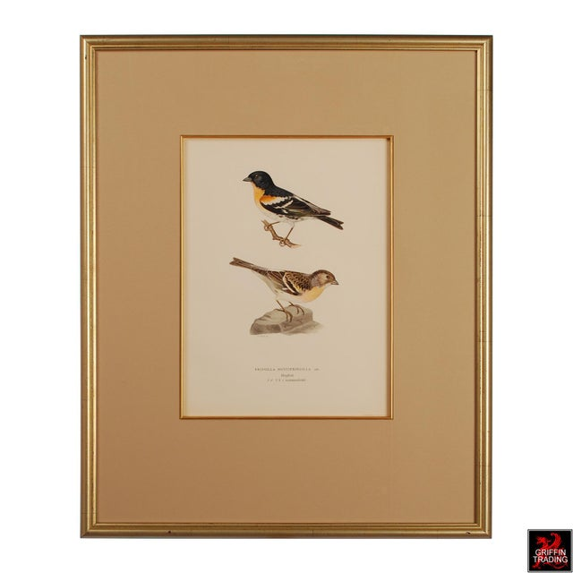Superb Collection of Antique Chromolithograph Prints of Birds 5404 For Sale In Dallas - Image 6 of 13