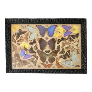 Vintage Pressed Butterfly Collage Mid Century Wall Art