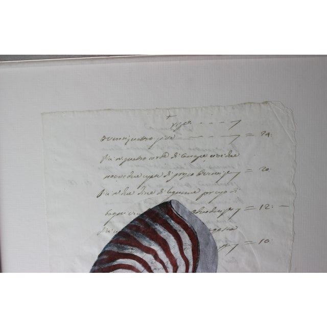 Hand Painted Nautilus Shell on Parchment For Sale - Image 4 of 10